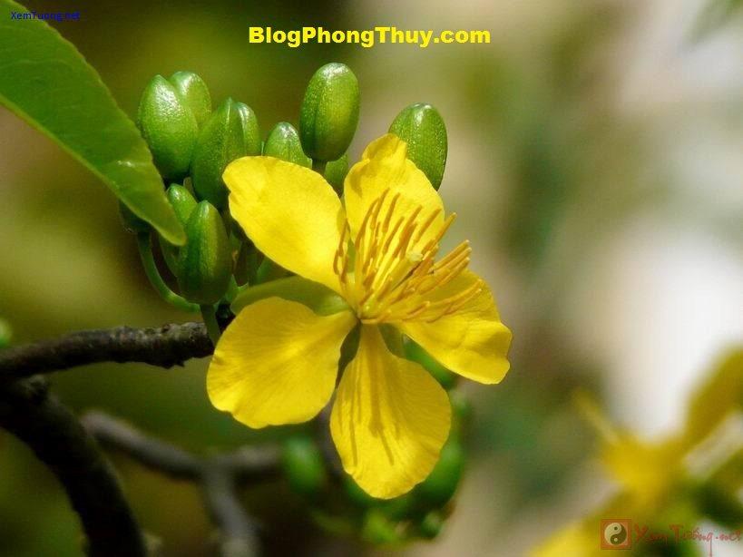 134hoamai1 Phong tục về những điềm lành và kiêng kỵ trong ngày Tết của người Việt