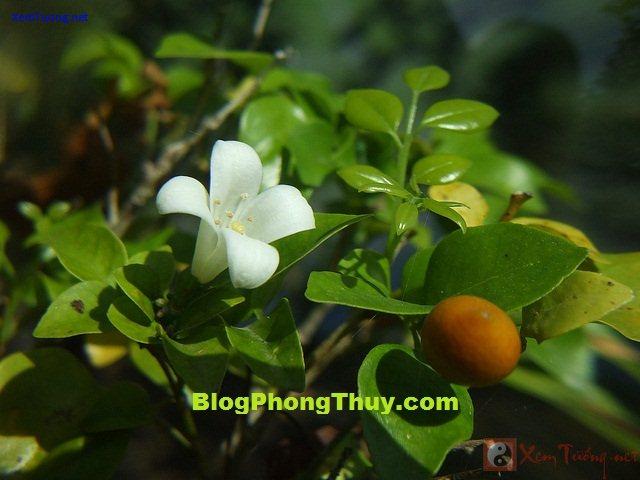 1hoaquat1 Phong tục về những điềm lành và kiêng kỵ trong ngày Tết của người Việt