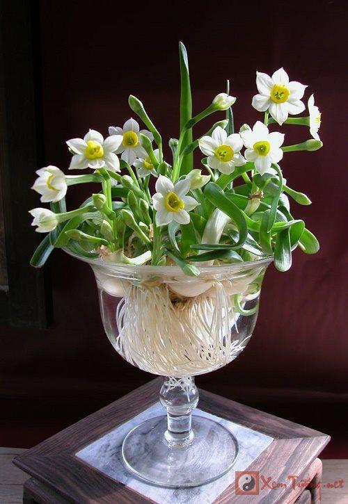 Ý nghĩa phong thủy của các loài hoa