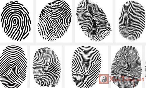 Khám phá bí mật ẩn giấu sau mỗi đường vân tay (phần 2)