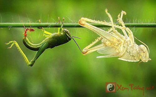 Thú vị với giấc mơ côn trùng trong tuổi thơ êm đềm