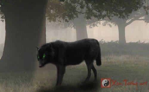 Truy tìm nguồn gốc loài chó ma có ánh mắt giết người