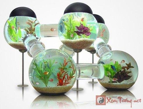 Nhà có nhiều tài lộc nếu đặt bể cá đúng hướng phong thủy