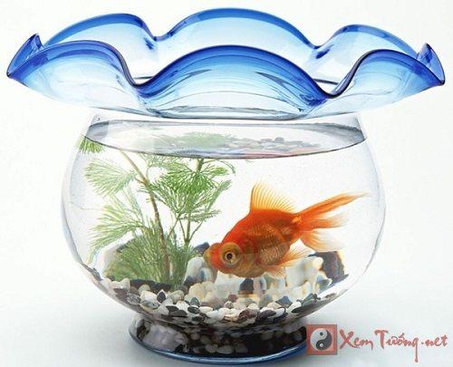 Phương vị nuôi cá phát tài phát lộc cho 12 con giáp (P2)