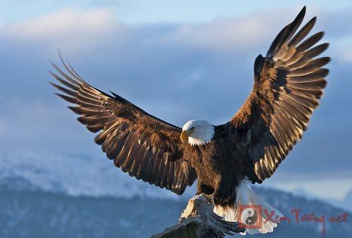 Mơ thấy chim ưng là điềm gì?