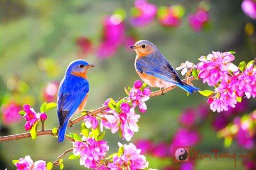 Tiết Lập Xuân - khởi đầu thăng hoa, dưỡng sinh triệt để