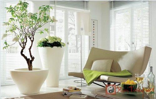 Vị trí đặt cây cảnh phong thủy trong nhà để thỏa mong ước