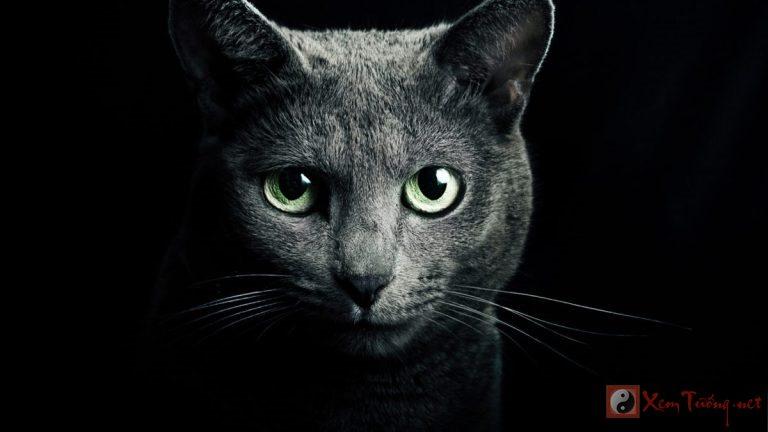 Mèo xua đuổi ma quỷ bảo vệ ngôi nhà của bạn