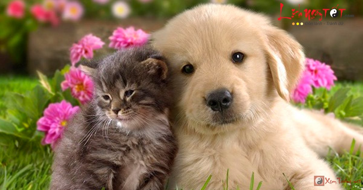Lý giải: Mèo vào nhà thì khó, chó đến nhà thì sang