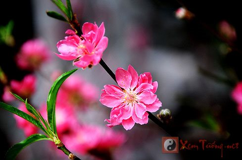 Thu choi hoa Tet cua nguoi Viet hinh anh