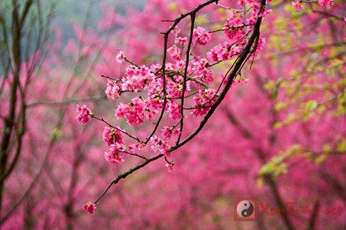 Tiet Lap Xuan - khoi dau thang hoa, duong sinh triet de hinh anh