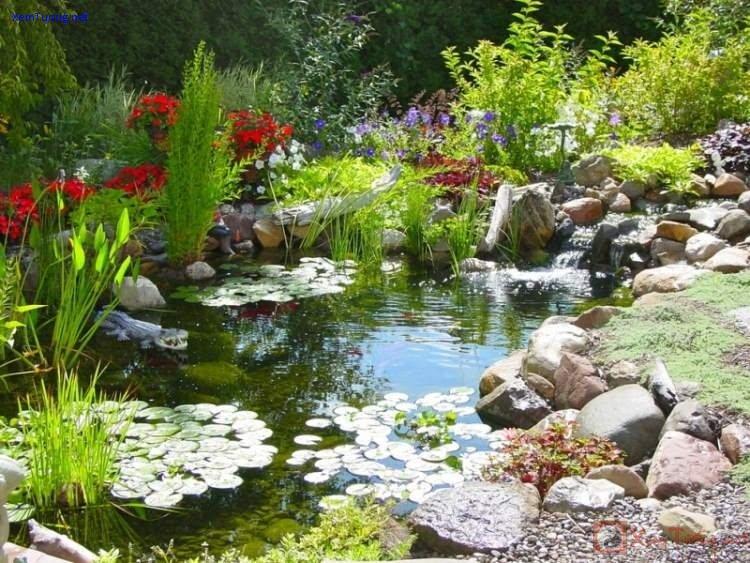 sân vườn tươi tốt