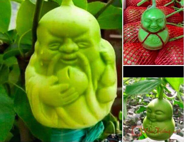 Hoa quả Trung Quốc độc hại, hình dáng lạ có mang lại tài lộc không?