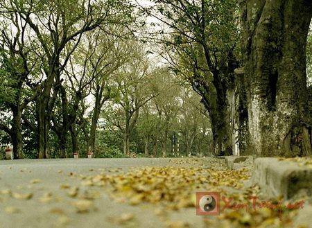 """Ý nghĩa của tiết """"Tiểu Tuyết"""" ngày 22 tháng 11."""