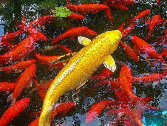 Ngủ mơ thấy cá thì báo hiệu điềm gì?