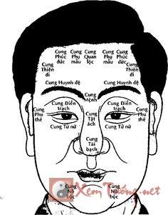Vị trí của các cung trên khuôn mặt và ý nghĩa của từng cung