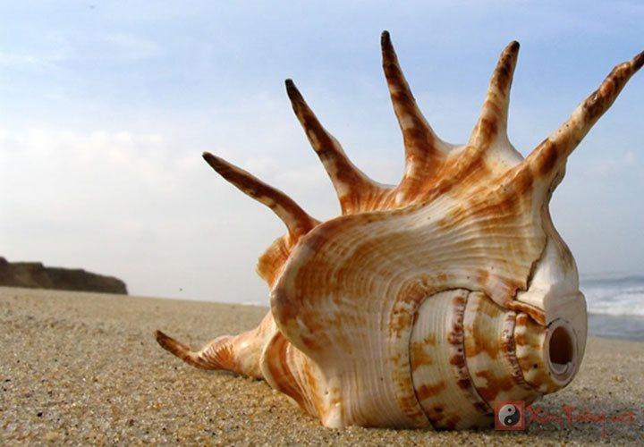 Yêu xa bền vững nhờ dùng vỏ ốc phong thủy