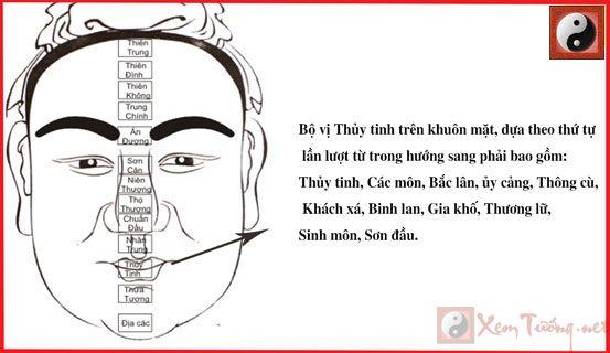 bo-vi-thuy-tinh