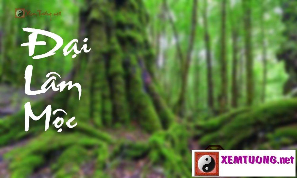 Đại Lâm Mộc - Cây lớn sống ở trong rừng